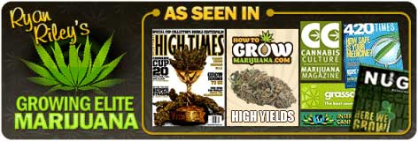 Growing Marijuana Guide