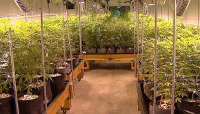 How Retail Cannabis Can Help Law Enforcement