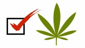 Marijuana Activists Pushing For Legalization Vote In York