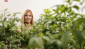 Legal Marijuana Could Be the First Billion-Dollar Industry Dominated By Women