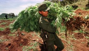 Is Mexico On Its Way To Legalize Marijuana