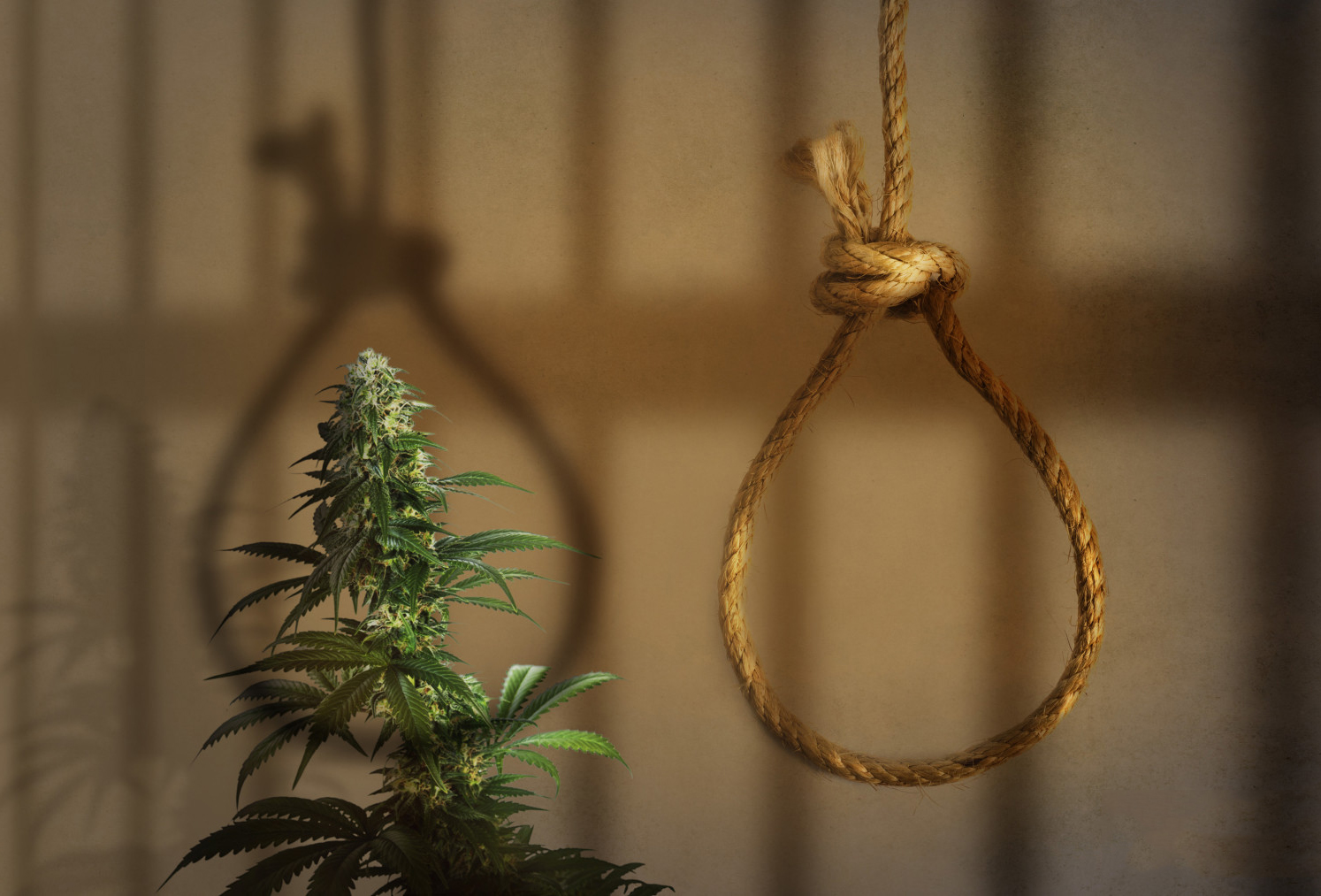 capital punishment marijuana