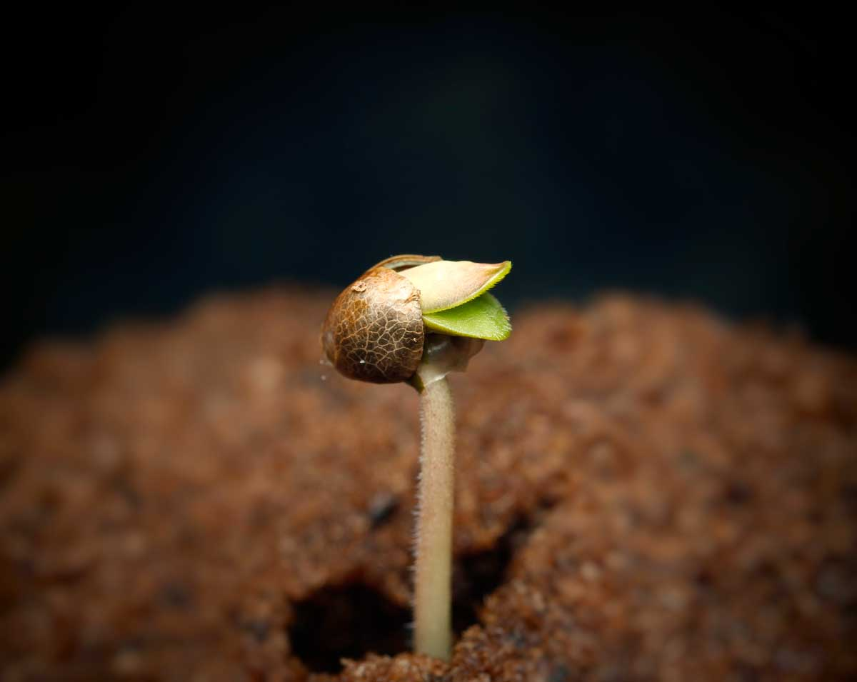 easiest way to germinate