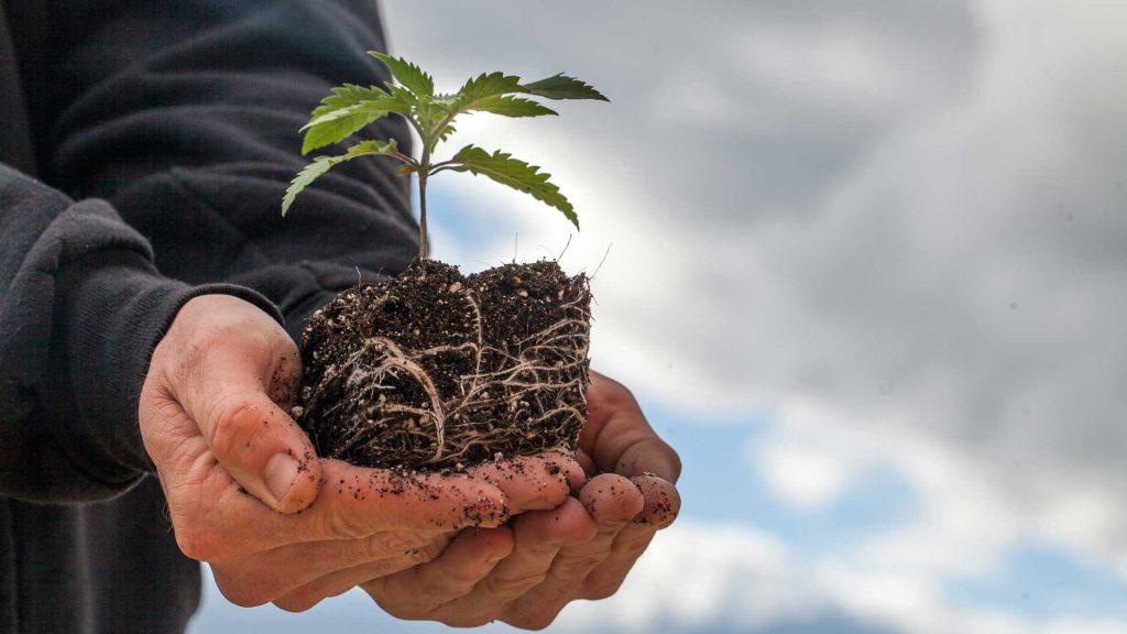 SEO Dispensary Grow Faster
